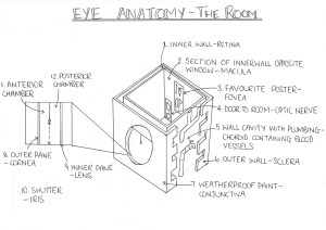 Eye anatomy diagram